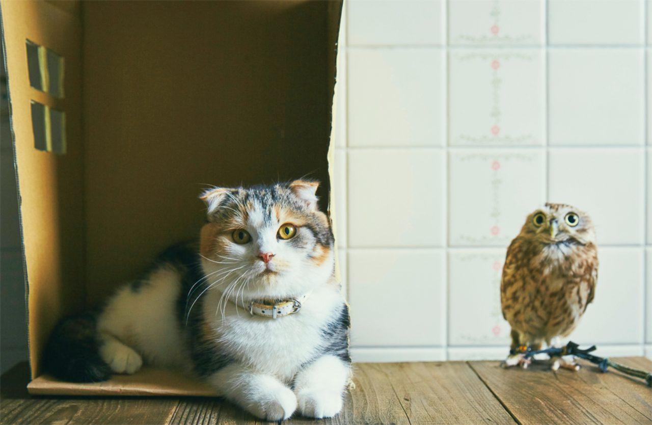 あまりの可愛さにツイッターで話題に! ふくろうと猫の種を超えた仲睦まじさにほっこり | FRaU