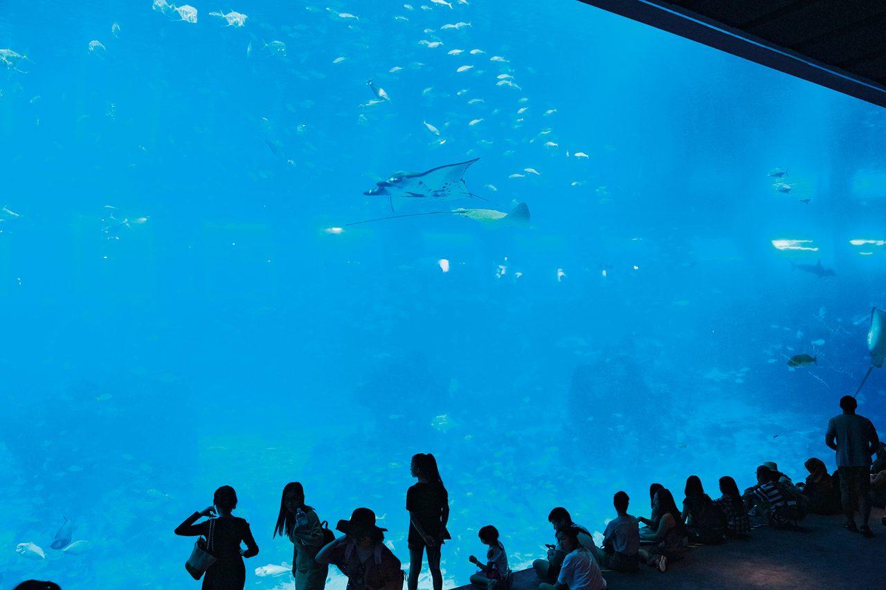 S.E.A. Aquarium シー・アクアリウム
