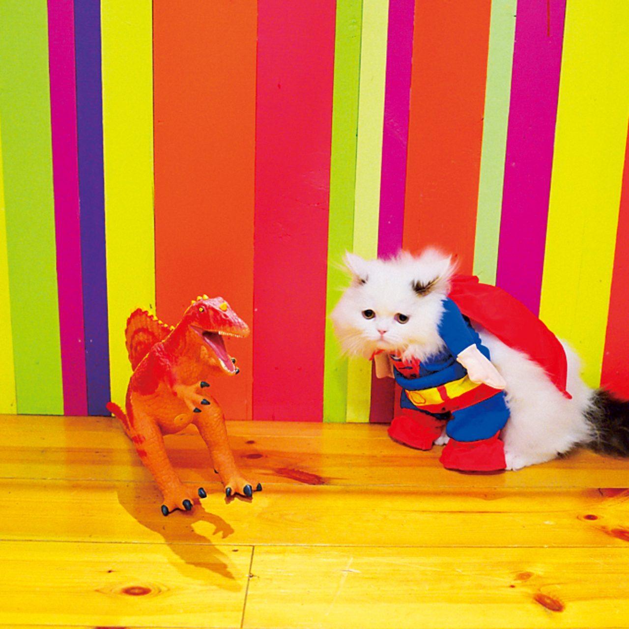 インスタグラムで世界中から「」いいね!」を連発、なネコ写真テク | FRaU