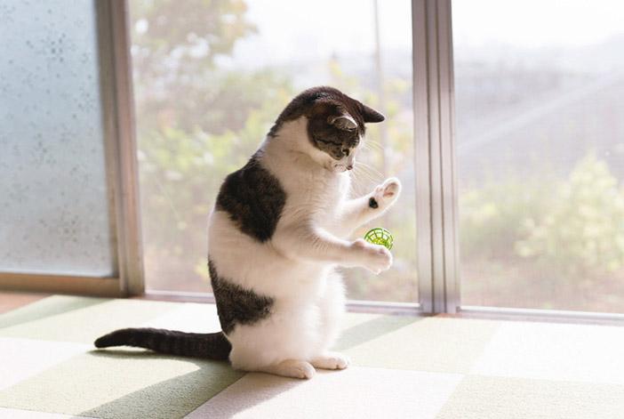 """猫との生活で、森下さんに""""新たに生まれたこと"""""""