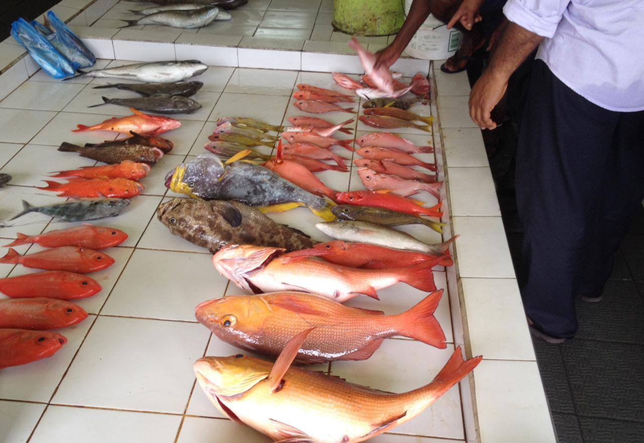 モルディブの首都「マレ」のローカルマーケットが面白い! [FRaU]