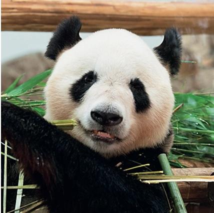 アドベンチャーワールドで可愛いパンダに接近しちゃおう♡ [FRaU]