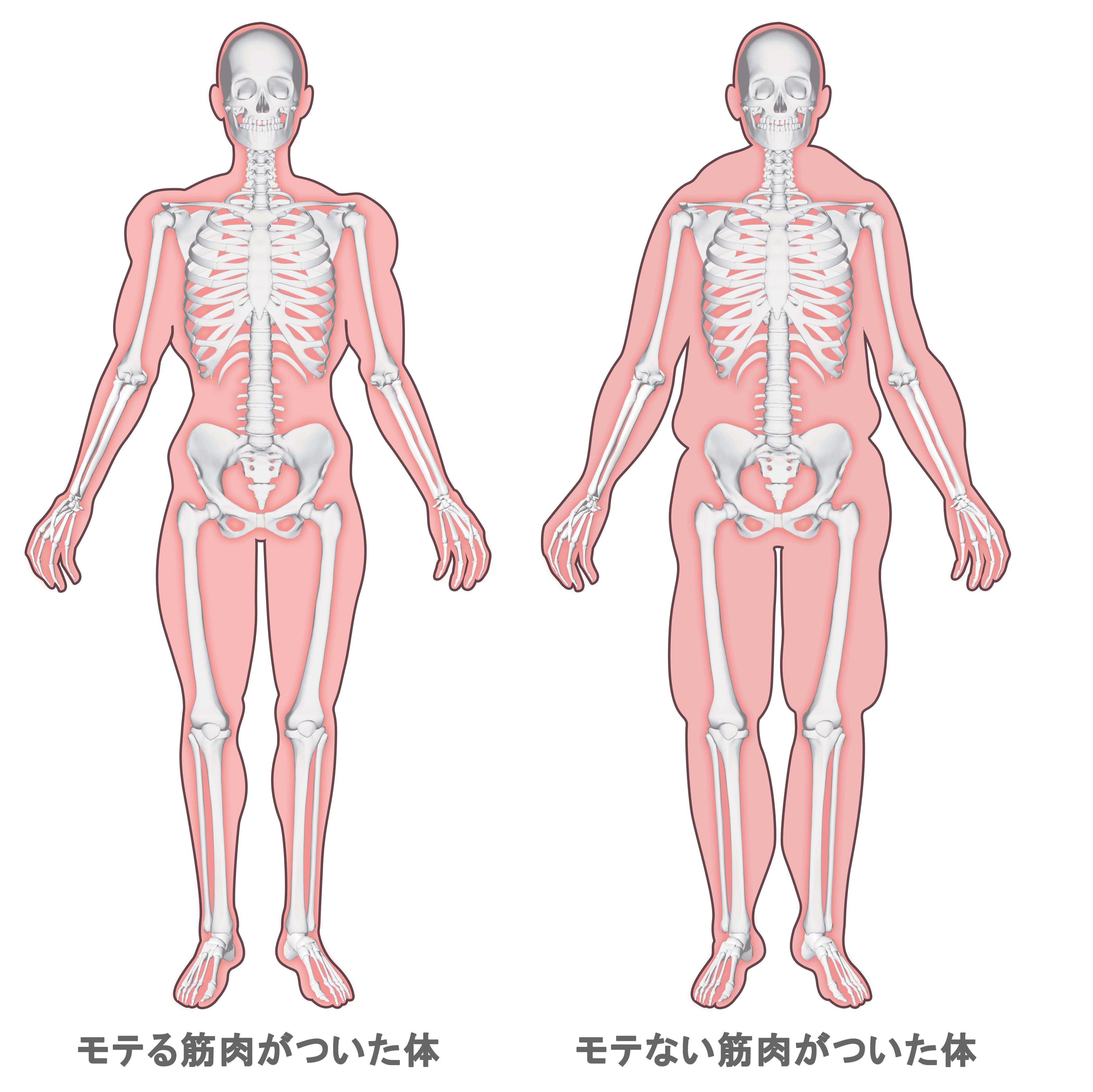 みるみる身体が変わっていく「モテる筋肉」ってなに? [おとなスタイル]