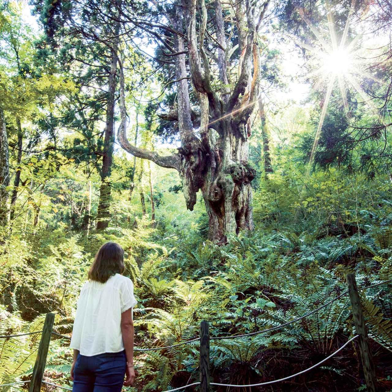 山を、自然を学ぶツアーが人気1:エコツーリズムで遊ぶ