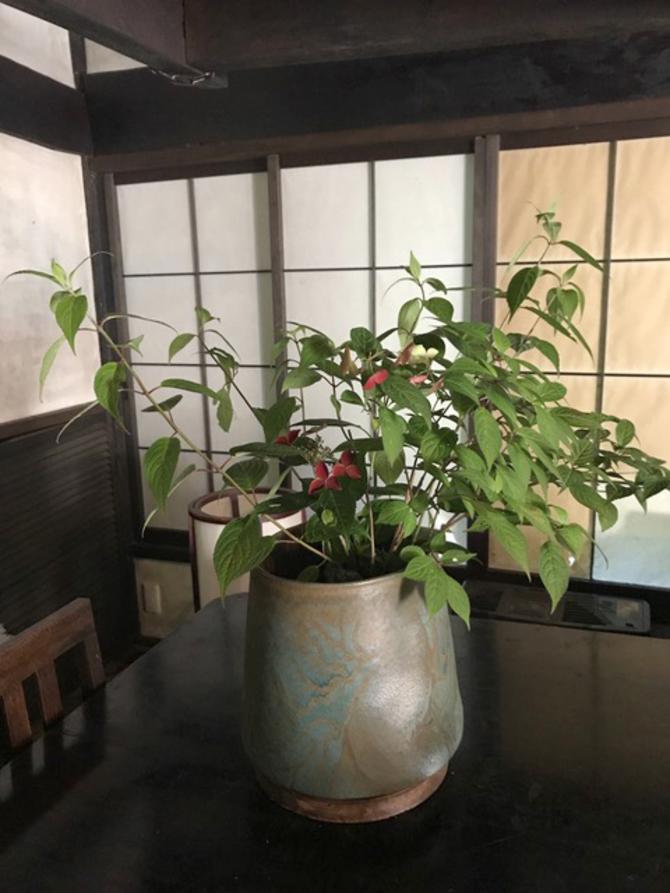 毋に学んだ自然の花たち、そして器